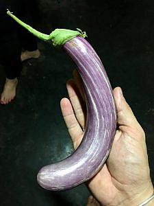 IMG 1148 225x300 Sri Lankan Curried Eggplant