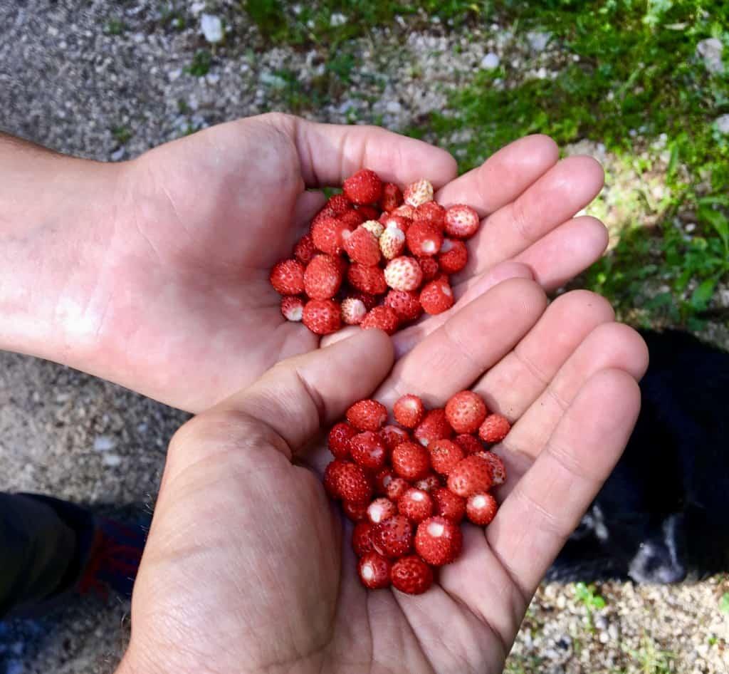 Berries on the Via Dinarica Trail Via Dinarica Trail Itinerary