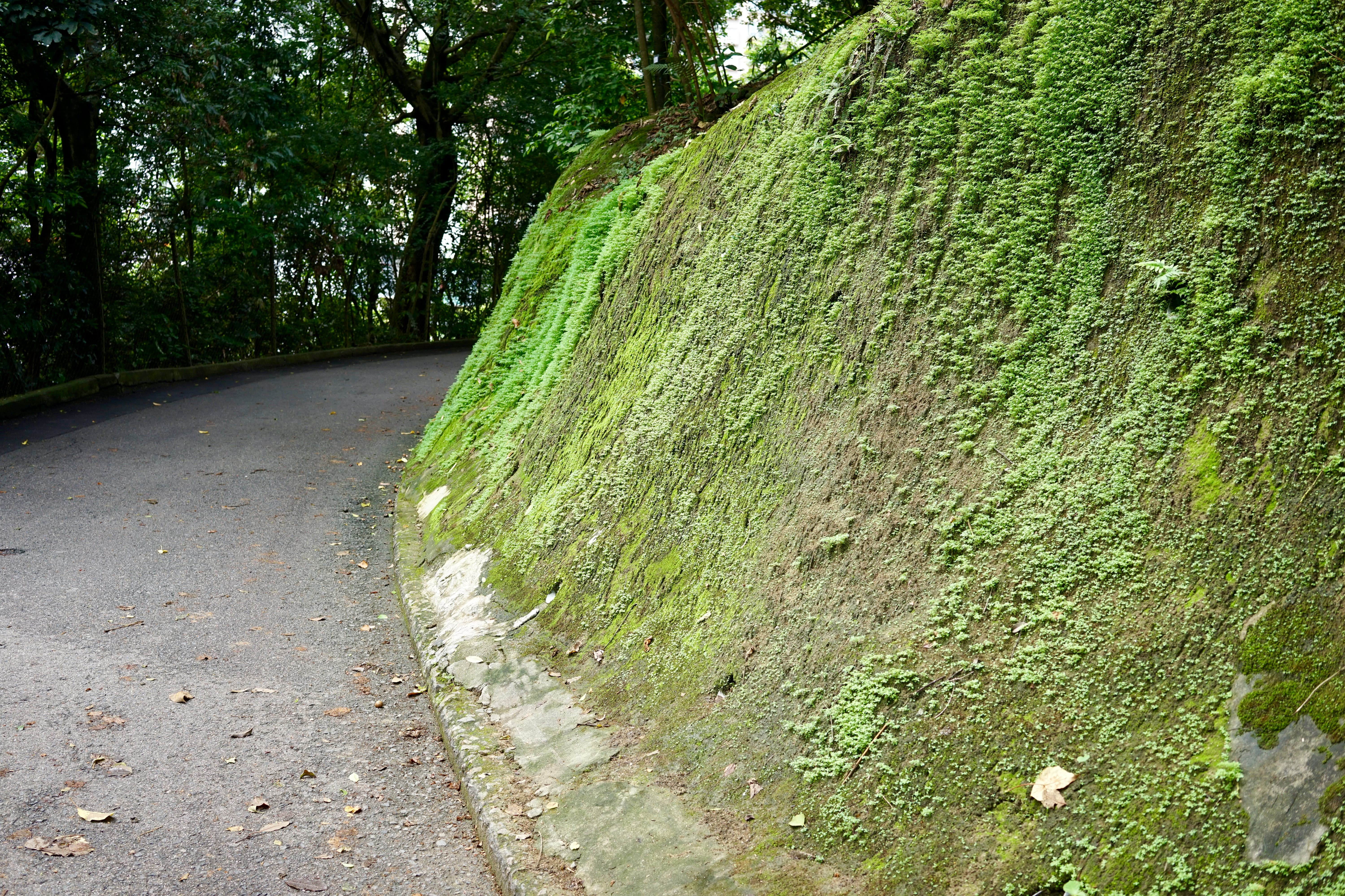 Go up Mount Parker road for Hong Pak Country Trail