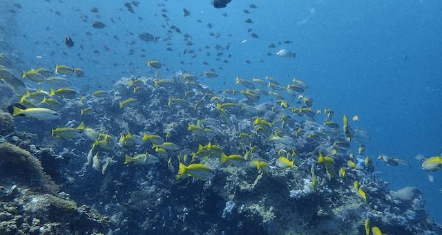 SCUBA Diving Koh Yao Yai Island Thailand