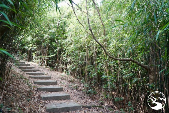 Enjoy the bamboo forest when you hike Mt. High West in Kennedy Town