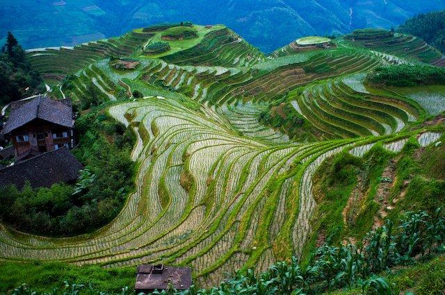 Longsheng Rice Terraces in Guilin China