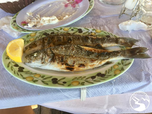 A grilled fish from the Adriatic Sea