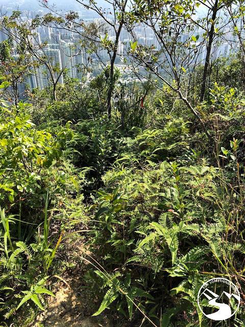 an overgrown path