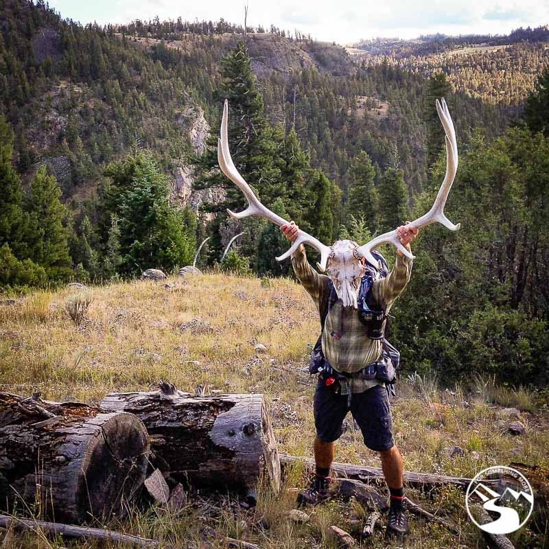 Elk scull and antlers