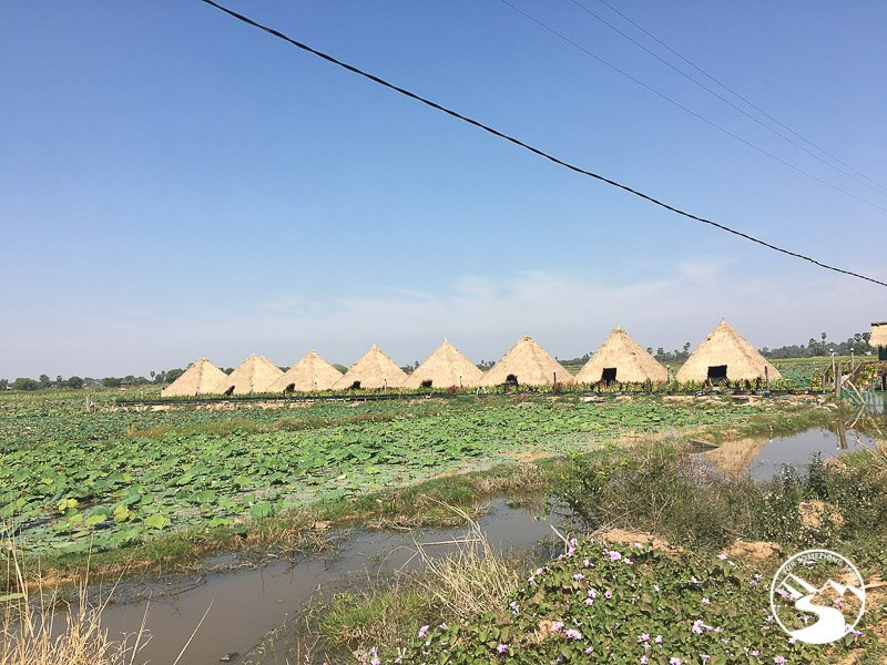 the overnight huts at the lotus farm
