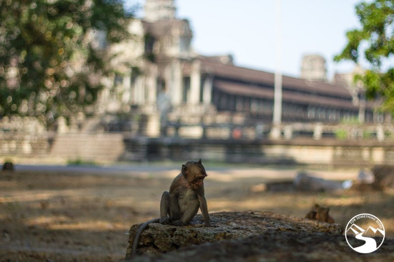 a monkey outside a temple in Cambodia