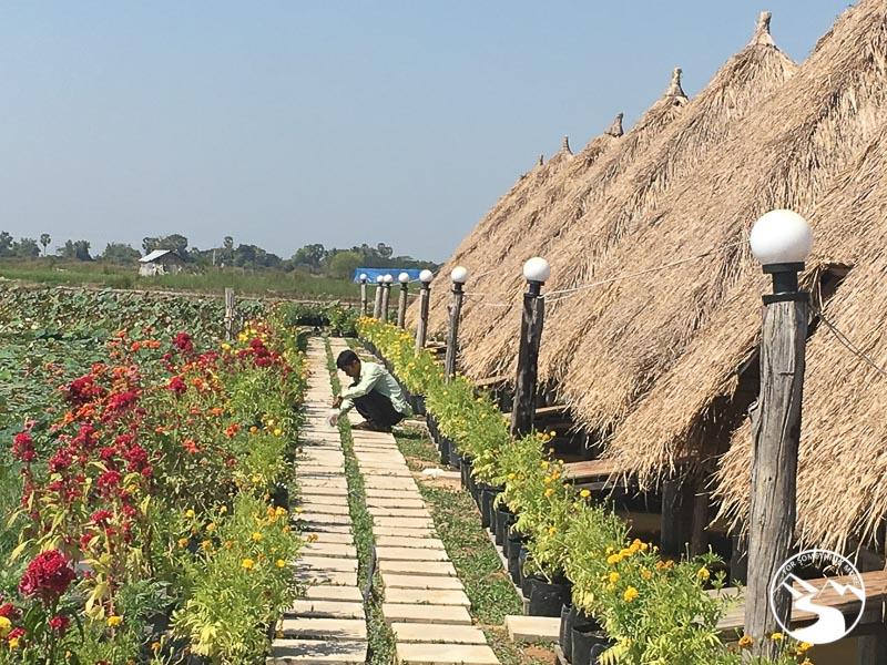 visit the lotus farm while you go biking in Siem Reap