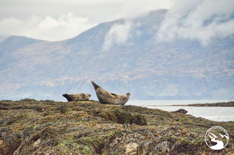 Lazy Sea Lions basking on the rocks