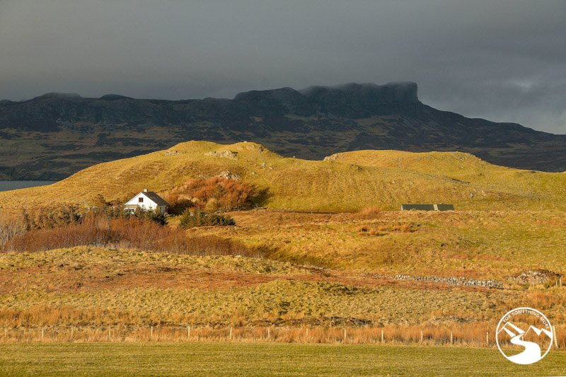 Golden pastures on the Isle of Muck