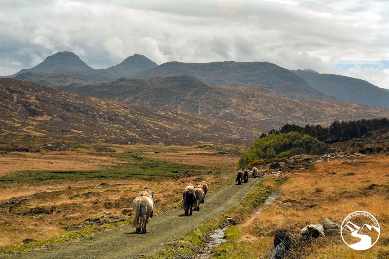 Wildlife on the Isle of Rum off the beaten path Scotland
