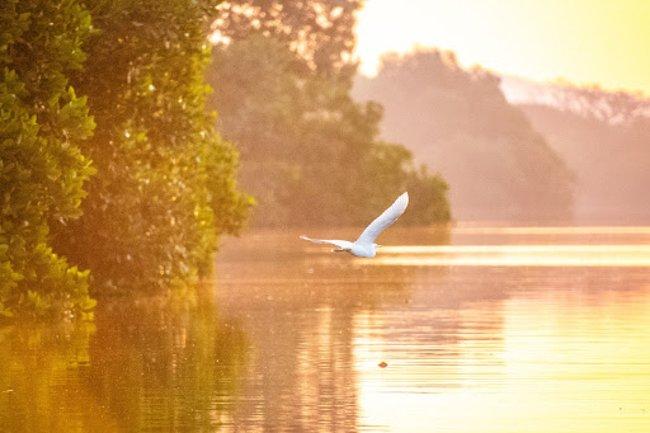 white bird flying at sunset