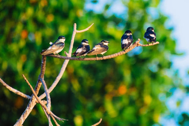 small birds resting on a branch