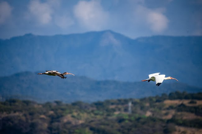 birds of prey flying in the mountains