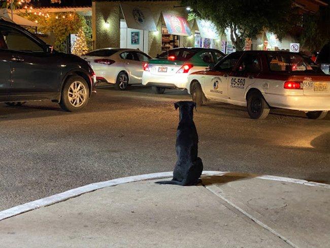 a dog siting at La Cruecita