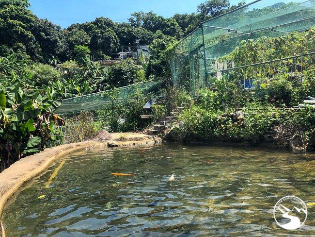 an aquaponic farm