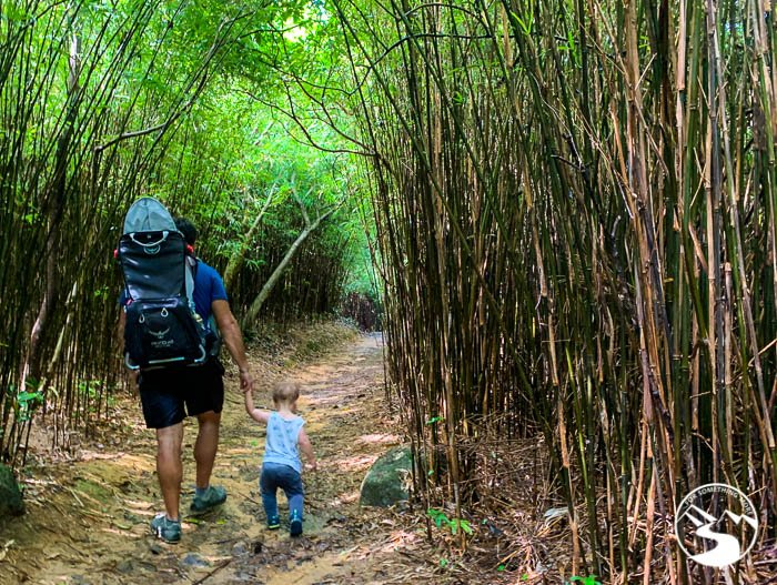 bamboo forest at Ho Pui Reservoir Family Walk