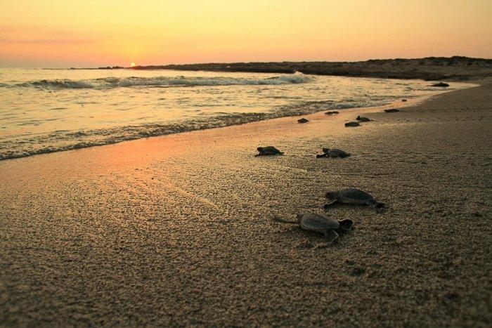 turtle spotting in cyprus