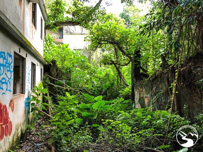 jungle overtaking a Hong Kong village house