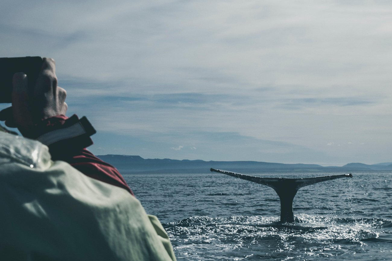 Next-Level-Sailing-Whale-Watching_COVER.jpg
