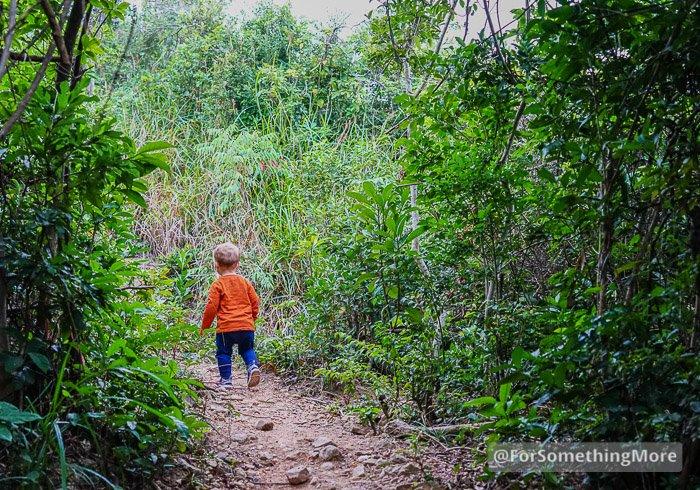 boy hiking Leaping Dragon Walk (龍躍徑)