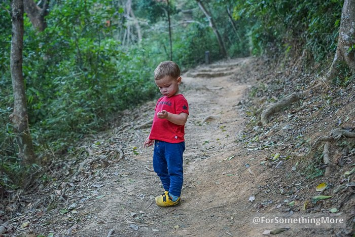 a boy hiking on the Eagle's Nest Nature Trail (鷹巢山)
