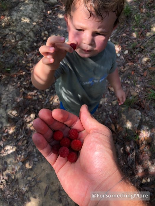 boy eating Chinese Bayberries at Ping Nam Stream